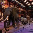 Exclusif : La soirée des GQ Awards, édition française, au sein du museum d'histoire naturelle à Paris le 20 novembre 2013