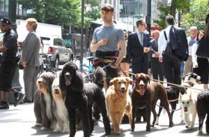 Daniel Radcliffe, pas vraiment incognito avec son nouveau look et ses chiens