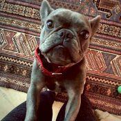 Eva Longoria : La star adopte un chien et défend ses origines mexicaines