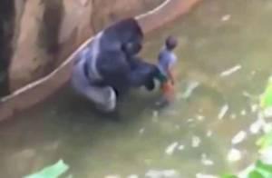 Mort du gorille Harambe, abattu : Les stars, en colère, réagissent...