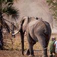 Le prince Harry a participé pendant quatre semaines au Malawi à l'opération 500 éléphants, au cours de l'été 2016, consistant à déplacer les pachydermes à plus de 350 kilomètres entre le Liwonde National Park et la réserve de Majete Wildlife pour équilibrer population et habitat naturel.