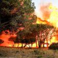 Un départ d'incendie attisé par un vent très violent s'est déclaré à 19 h30 dans les collines de Gigaro, à La Croix-Valmer le 23 juillet 2017. Le fameux site de l'Escalet a été ravagé et le panache de fumée poussé par un mistral impressionnant a envahi la baie de Pampelonne et est visible dans tout le Golfe de Saint-Tropez. Canadairs et trackers ont tournoyé jusqu'à la nuit tombée en espérant contenir un feu attisé par un vent extrêmement virulent. En vain. L'incendie a dévalé au galop sur Gigaro avant de s'attaquer à Escalet, où la panique a gagné les habitants, évacués la nuit. Plus de 300 ha sont déjà partis en fumée. © Dominique Jacovides-Cyril Moreau/Bestimage