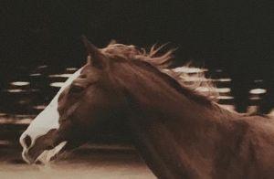 Shannen Doherty en deuil : une mort qui lui met le