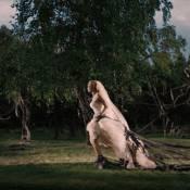 Le casting ciné : Kirsten Dunst mélancolique, des filles délurées et des singes