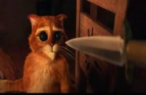 Antonio Banderas : Un chat potté qui va vous faire craquer