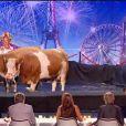 Heidi et ses vaches dans La France a un Incroyable Talent sur M6 le mercredi 2 novembre 2011