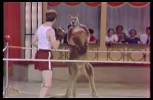 Woody Allen affronte un bébé kangourou dans un combat de boxe... A vos paris !