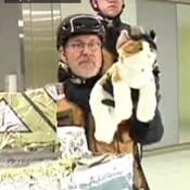 Steven Spielberg : Le réalisateur culte craque à la télévision américaine