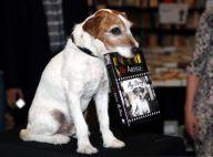 Uggie - The Artist : L'intrépide Jack Russell dédicace ses mémoires