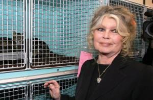 Brigitte Bardot : Ses deux éléphantes protégées définitivement sauvées !