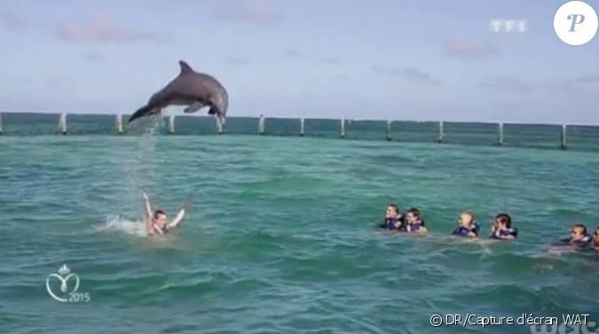 Rencontre avec les dauphins punta cana