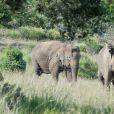 Exclusif - La princesse Stéphanie de Monaco a invité le 8 juillet 2015 le photographe Michael Alesi à un rendez-vous avec les éléphantes Baby et Népal, qu'elle a recueillies au domaine de Fonbonne en juillet 2013, à l'occasion des deux ans de leur sauvetage. L'occasion d'admirer une nouvelle fois la magnifique histoire d'amour entre la princesse et ses deux protégées, et de contribuer à leur sauvegarde en aidant l'association dédiée.