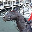 Iman Perez sur Power de Puychety (le cheval du film Jappeloup) - Détente - Longines Paris Eiffel Jumping à la plaine de Jeux de Bagatelle à Paris, le 2 juillet 2016. © Borde-Veeren/Bestimage