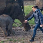 Stéphanie de Monaco : Marraine de coeur à la rencontre de l'éléphanteau Ta Wan