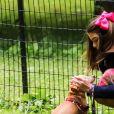 Suri Cruise, une attelle à la cheville, joue avec ses chiens dans un parc à New York, le 23 juin 2018