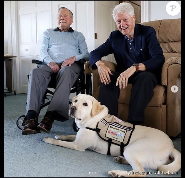 Sully, le fidèle compagnon de George H.W. Bush sur Instagram.
