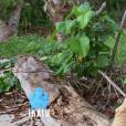 """Brice lors du deuxième épisode de """"Koh-Lanta, la guerre des chefs"""" (TF1) jeudi 21 mars 2019."""