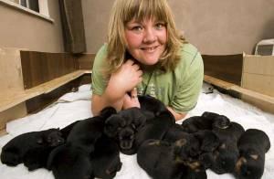Découvrez la plus large portée de chiens d'Angleterre en images ! C'est impressionnant !