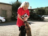 Lady Gaga : Ses chiens enlevés, leur nounou s'est fait tirer dessus