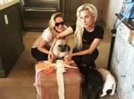 Lady Gaga : Son dogsitter attaqué et ses chiens kidnappés, elle est sous le choc