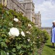 """La reine Elisabeth II reçoit des mains de Keith Weed, président de la Société Royale d'Horticulture, la rose """"Duke of Edimburgh"""" au château de Windsor. Le 9 juin 2021"""
