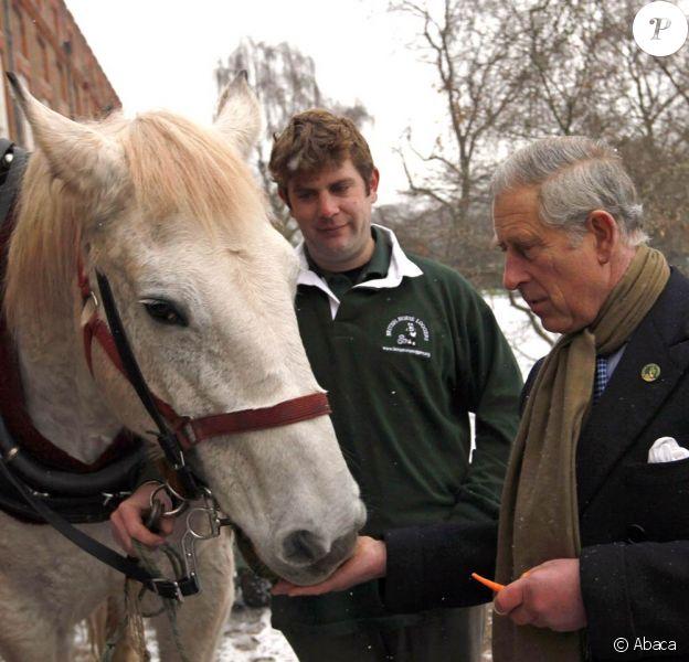 Le 3 décembre 2010, le prince Charles réceptionnait son sapin de Noël, porté par un Percheron. Son épouse Camilla, dans le même temps, se démultipliait entre inaugurations et rencontres avec des écoliers.