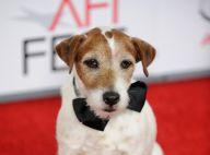 Uggie, jack russel de The Artist : Star des Colliers d'or, son talent récompensé