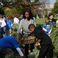 Michelle Obama dans le jardin potager de la Maison Blanche le 30 octobre 2013, pour lequel le chef pâtissier Bill Yosses l'a aidée.