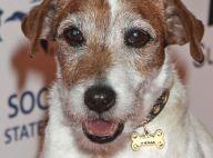 Uggie, le chien de Jean Dujardin dans The Artist, est mort