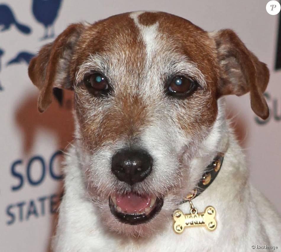 Le chien Uggie lors des Genesis Awards à Beverly Hills le 24 mars 2012.