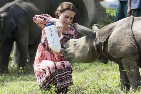 Kate Middleton et William au parc Kaziranga : Safari et gros, très gros bébés...