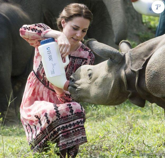 Kate Middleton (en robe Topshop) et le prince William ont eu la chance de participer au nourrissage de deux éléphanteaux et un bébé rhinocéros le 13 avril 2016 dans un centre de sauvegarde et de réhabilitation des animaux sauvages dans le parc Kaziranga, dans l'Etat d'Assam, au 4e jour de leur visite officielle en Inde.