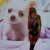 Paris Hilton : Inséparable de son chihuahua, qu'elle caresse en petite tenue