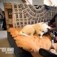 "Thibaud, candidat unijambiste - ""The Island 3"", lundi 10 avril 2017, M6"