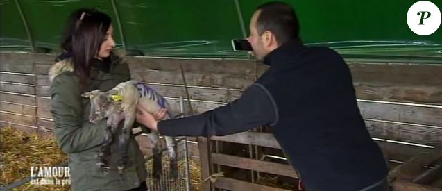 """Emilie et Sébastien attendris par le petit agneau dans """"L'amour est dans le pré"""" sur M6 le 21 août 2017."""