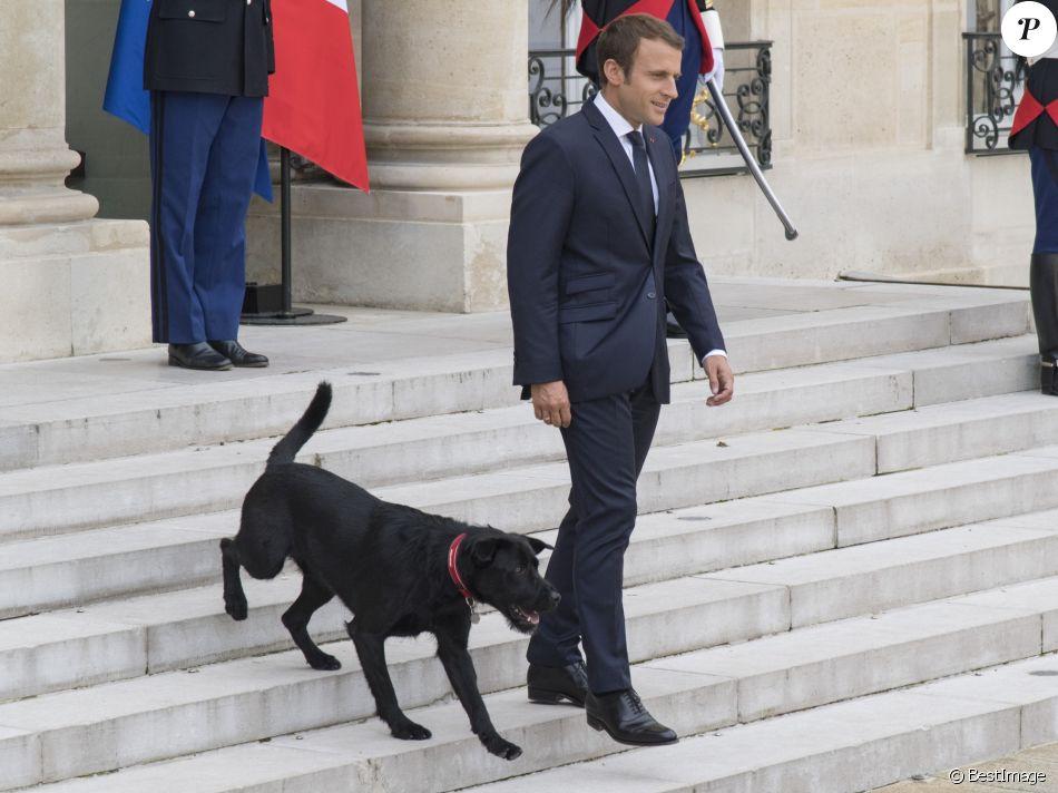 """Résultat de recherche d'images pour """"chien macron"""""""
