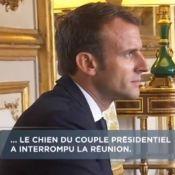 Emmanuel Macron : Son chien Nemo urine en pleine réunion à l'Elysée