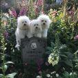 Barbra Streisand et ses chiens sur Instagram.