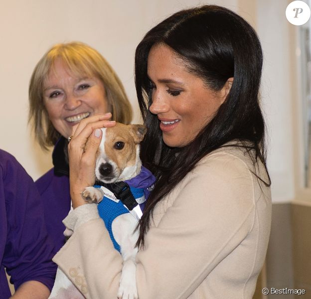 """Meghan Markle, duchesse de Sussex, enceinte, visite le refuge pour animaux """"The Mayhew Animal Home"""" dont elle est la marraine. Londres, le 16 janvier 2019."""