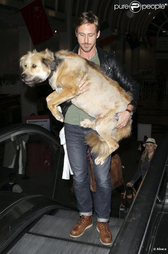 Ryan Gosling et son chien arrivant à l'aéroport de LAX le 17 juin 2011. Son chien étant vieux et fatigué, il le porte.
