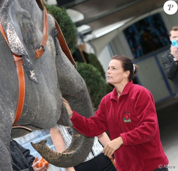 La princesse Stéphanie de Monaco, qui ''a dû être éléphant dans une vie antérieure'' selon ses propres mots, le 15 janvier 2013 lors de la conférence de presse du Festival du cirque de Monte-Carlo.