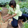 Michelle Obama en plein jardinage à la Maison Blanche. Washington, le 28 mai 2013.