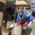 Exclusif - Toilette et manucure de Baby et Népal, les deux éléphantes recueillies au domaine de Fonbonne par la princesse Stéphanie de Monaco aux petits soins, le 20 février 2014.