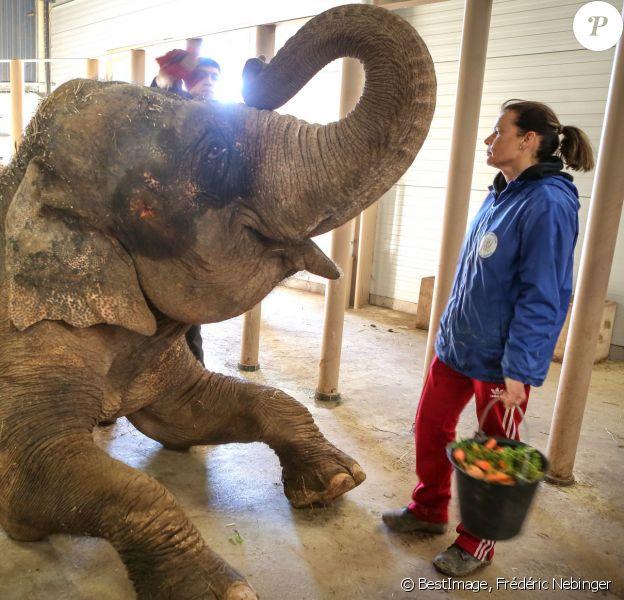 Exclusif - Toilette et manucure de Baby et Népal, les deux éléphantes recueillies au domaine de Fonbonne par la princesse Stéphanie de Monaco, le 20 février 2014.