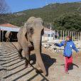 Exclusif - Baby et Népal, les deux éléphantes recueillies au domaine de Fonbonne, sont soignées par la princesse Stéphanie de Monaco, le 20 février 2014.