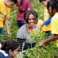Michelle Obama s'active dans le potager de la Maison Blanche, à Washington, le 14 octobre 2014