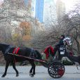Tamara Ecclestone et son époux Jay Rutland profitent d'une ballade en calèche dans Central park en compagnie de leur fille Sophia, le 22 novembre 2014