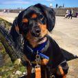 Vogue Williams a ajouté une photo de son chien Winston, sur Instagram - Juin 2015