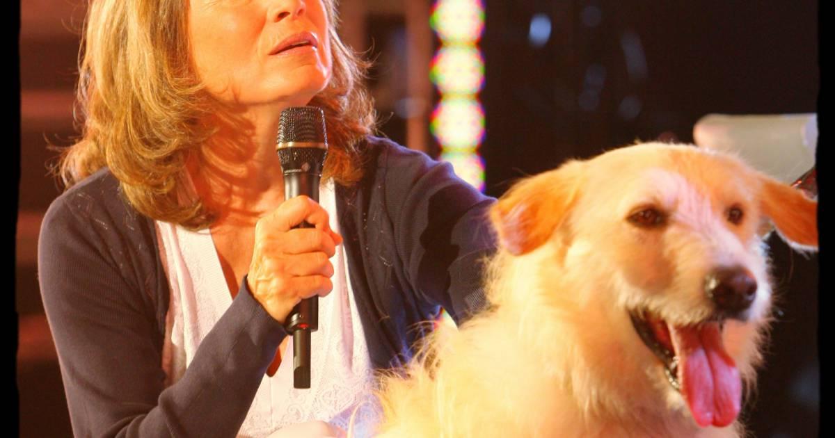 Reha hutin premier salon de la television a paris porte for Salon porte de versaille kidexpo