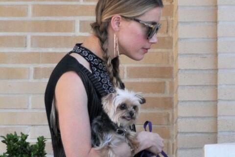 Amber Heard : Shopping et réconfort avec son petit chien